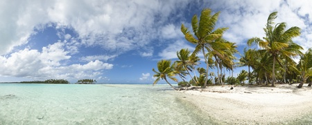 fiji: Paradise white sand beach and palm tree of a tropical island panoramic view