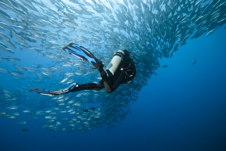 Trevally and diver at Panglao - Philippines Stock Photo