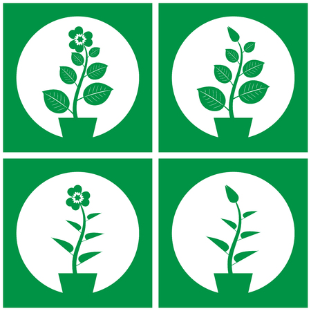 Vector set of four simple indoor plants in frame.
