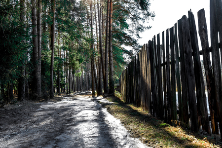 fence: Wooden fence on the edge of pine forest on early spring day.