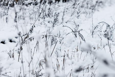 non urban: Grass on the coast of overgrown pond in winter day.