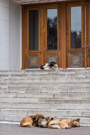 threshold: Street dogs sleeping on the threshold of a public building. Stock Photo