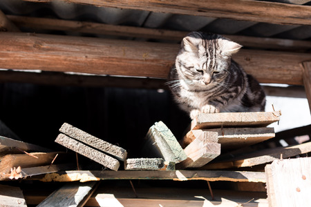 grey cat: Grey tabby cat sitting under the roof of the barn . Stock Photo