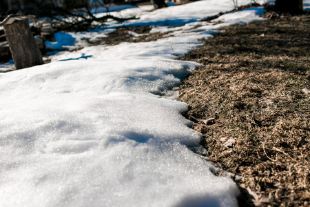 thawed: Dry grass opened under the snow thawed in the spring. Stock Photo