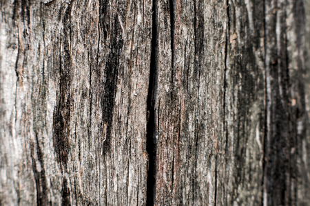 wood surface: Textural image. Surface of rough wood in macro. Stock Photo