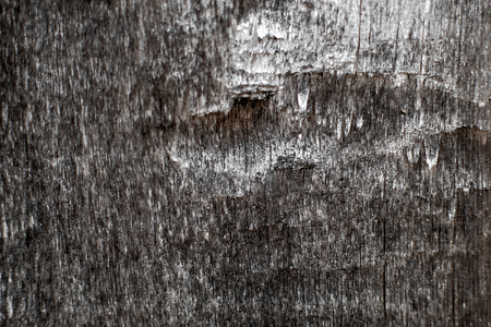 textural: Textural image. Surface of rough wood in macro. Stock Photo