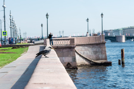 piter: Crow on the parapet holding a fish it founded on the water.