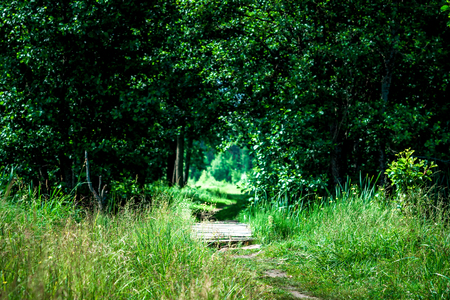 shadowy: Summer day background. Plank footway over the brook leaving to the tree shadowy arch.