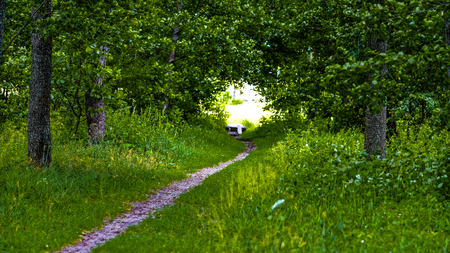 shadowy: Summer day background. Footway over the brook leaving to the tree shadowy arch. Stock Photo