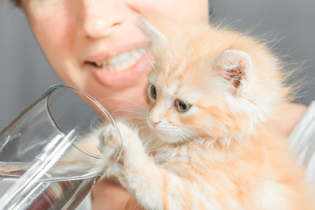 unwillingness: Woman watering the red fluffy kitten which pushes the glass with his paw. Color toning.