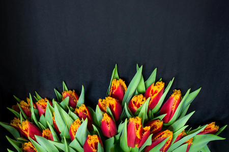 Bacground: bouquet of tulips in black bacground bottom Stock Photo