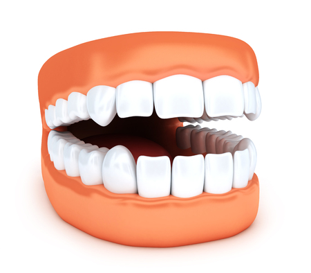 whiten: Human jaw and white tooth. 3d illustration Stock Photo