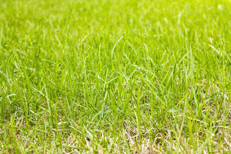 Green lawn grass for the background