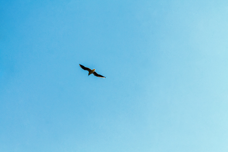A seagull is flying in a blue sky with white clouds. In the photo there is a copy space.