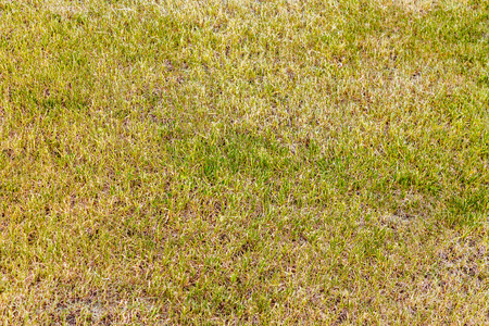 Well groomed green lawn for golf, football and other outdoor sports. Stock Photo