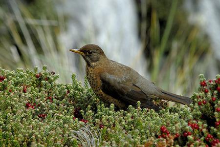 glasier: Bird Stock Photo