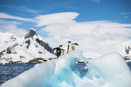 penguin colony: Adelie Penguins on the ice in Antarctica