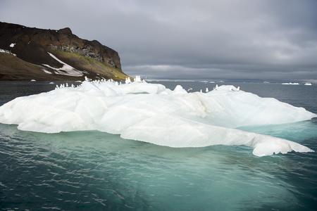 franz: Seagulls on the iceberg Franz Josef Land