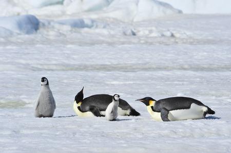 advise: Snow Hill October 14 to 26, Antarctica 2010 on icebreaker Kapitan Khlebnikov