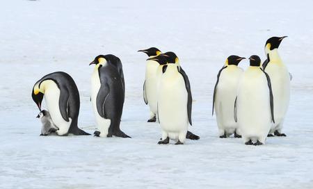 Naar het hart van de natuur reizen naar Antarctica.