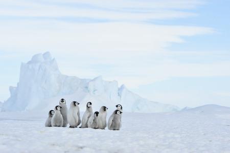 南極の自然旅の心に