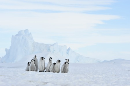 To the heart of nature travel to Antarctica.
