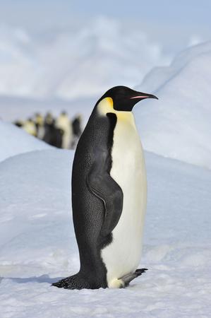 Au coeur de la nature, voyagez en Antarctique. Banque d'images