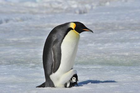 Al corazón de la naturaleza viajar a la Antártida. Foto de archivo