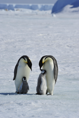 advise: To the heart of nature travel to Antarctica.