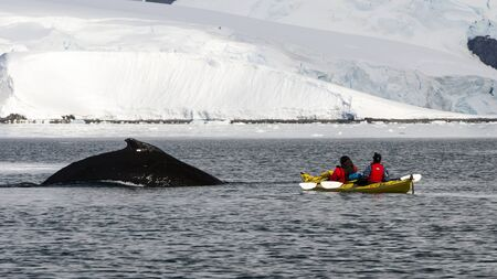 Kayaking with whales in Antarctica beautiful view of mountain