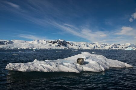 Beautiful view of icebergs with seals in Antarctica