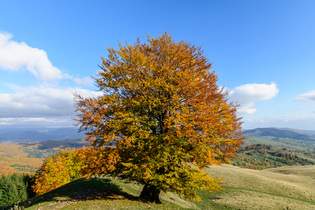 Lone tree on the crest of a hill. Horizontal view of a lone tree on top of a hill in a sunny autumn day. Stock Photo