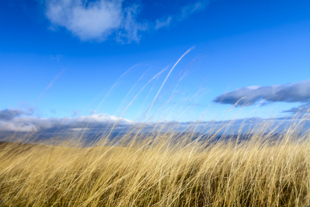 dry grass: Dry grass with blue sky behind. Horizontal perspective of dry grass yellow background with blue sky behind on autumnal mountain.