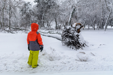 severity: Broke down tree on the severity of fallen snow. Child looking over the root of a fallen tree in the park in winter.