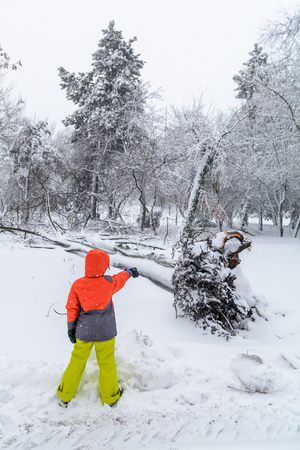 severity: Broke down tree on the severity of fallen snow. Child pointing over the root of a fallen tree in the park in winter.