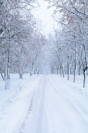 Snow forest alley. Winter park with snow trees and road at white cloudy sky Stock Photo