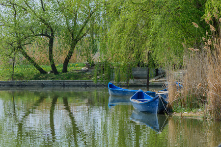 Image with willows and blue boats over lake water. Weeping willow with long branches reflecting in lake water along with boats.