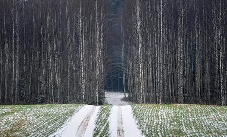Late autumn landscape with a winding road, the first snow, green winter crops and a wall of thin birches.A minimalistic landscape with bleak autumn forest.Belarus,Vitebsk region Reklamní fotografie