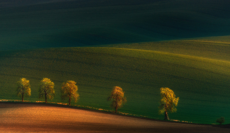 Shadows on the fields.Five lonely trees in moravian fields at colorful sunset in Czech Republic. Spring landscape with sunny countryside valley. Golden hour, warm color from the spring sun. Piligrims