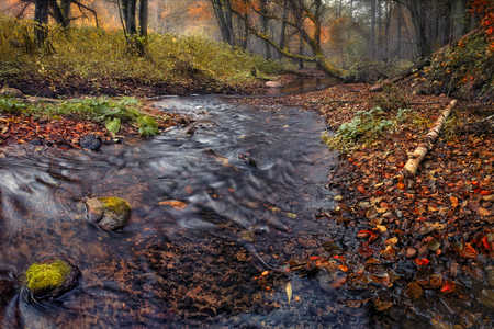 Panorama of the falling forest with a lot of red foliage. Belorussian autumn forest, with a little cold river and lots of fallen leaves.Stones with moss. Blurred water
