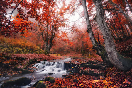 Scenic view of misty autumn landscape with beautiful waterfall at mountain river in the forest with red foliage.Trees with red leaves.Stones with moss in the water. Blurred water. Nature.Creek and bridge Reklamní fotografie