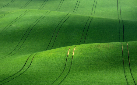 Moravian rolling landscape on sunset in green colors. Moravia, Czech Republic.Green rolling hills of wheat that resemble corduroy with lines stretching into the distance. Reklamní fotografie
