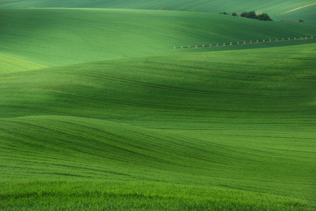 Summer rolling green hills with fields of wheat and trees. Amazing fairy minimalistic spring landscape with green grass in the morning in South Moravia, Czech Republic. Fifty shades of green Reklamní fotografie