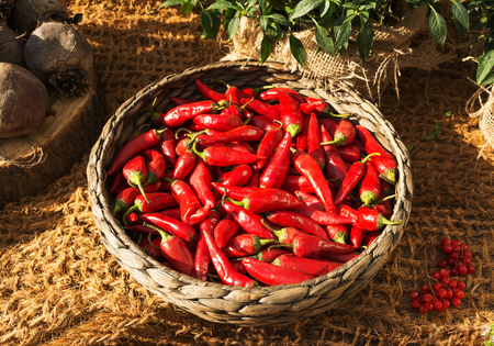chili: Basket full of red, fiery chili peppers Stock Photo