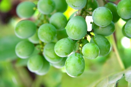 green vine with blurred background photo
