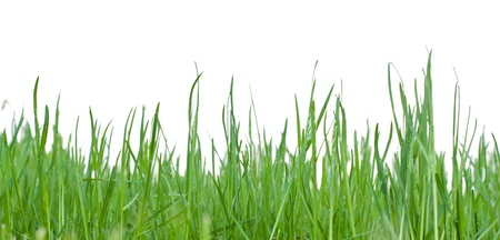 cutout: Green grass isolated on white background