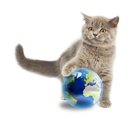 British kitten playing with earth planet isolated on white