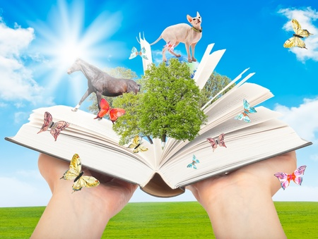 Magic book in human hands with a green tree and the rays of light on the background of nature. Symbol of knowledge. Imagens