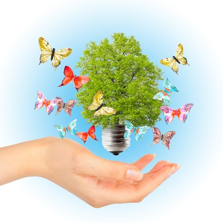 incandescent: Hand and green tree in light bulb. Alternative energy concept