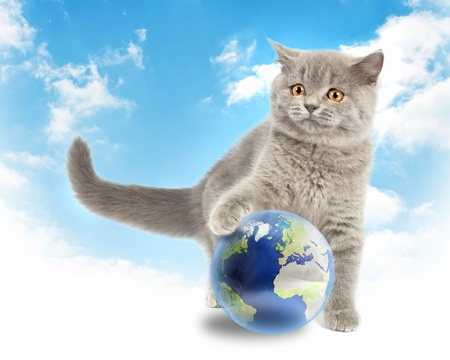 save the environment: British kitten playing with earth planet on sky background